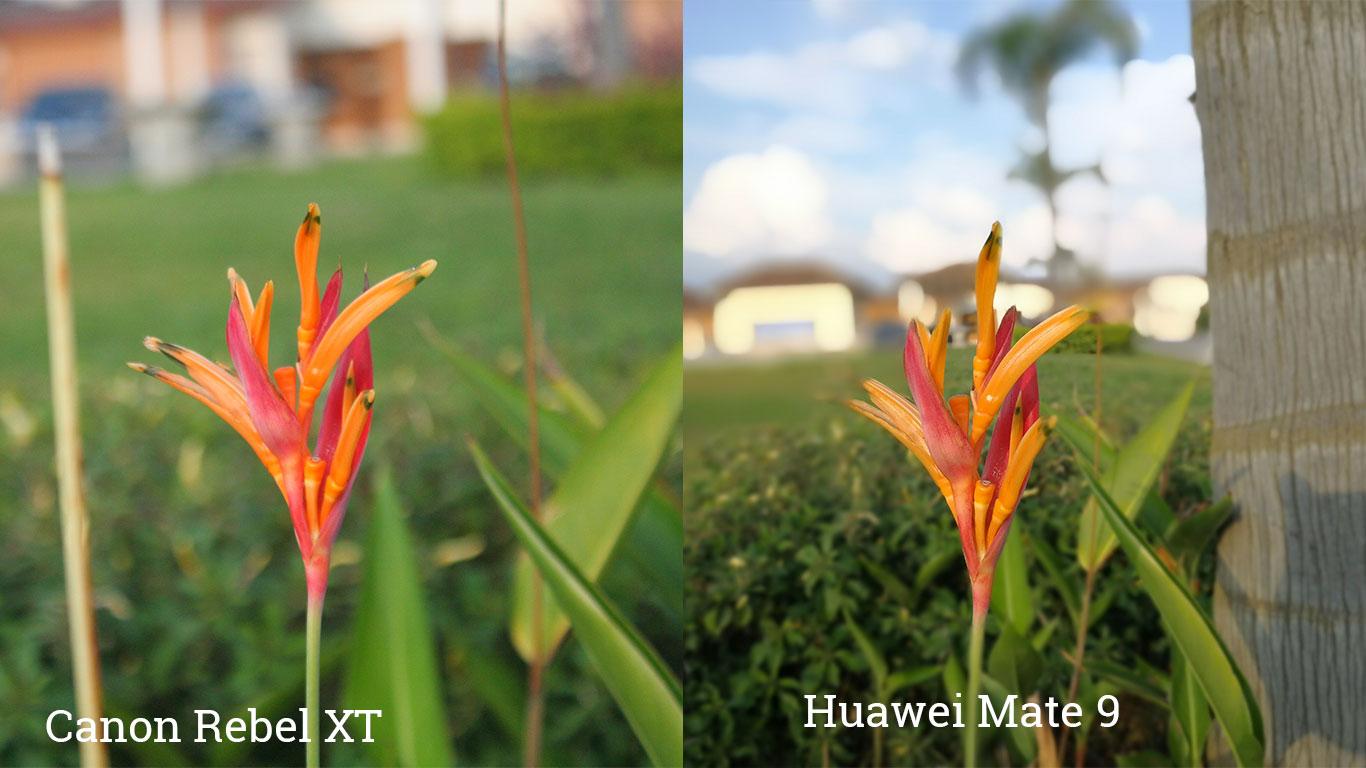 Cámaras Canon Rebel y Huawei Mate 9, lado a lado.